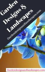 Drought tolerant landscaping Los Angeles.pdf